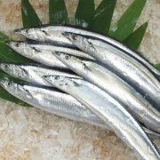 日本秋刀魚 1